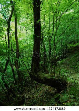 a image of tree a right angle #1394173889