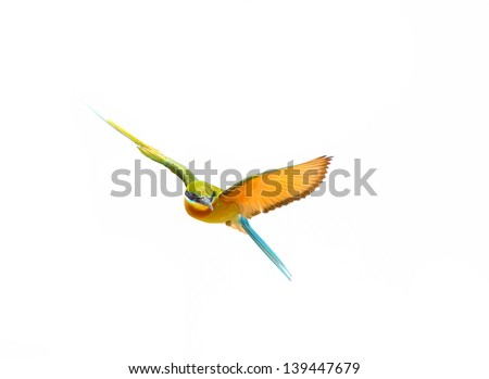 Blue-tailed Bee-eater in flight isolated on white background #139447679