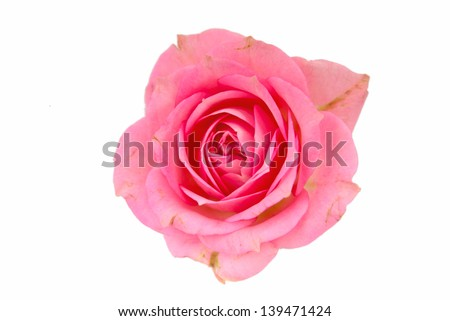 Single pink rose in vertical isolated over white background #139471424