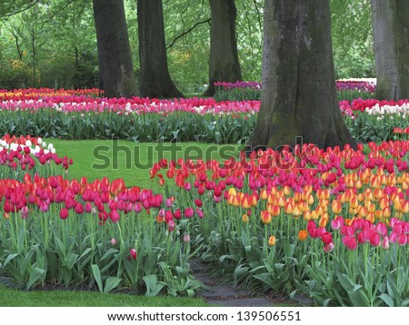 Tulip gardens with red, yellow, white and pink tulips, near Lisse, the Netherlands