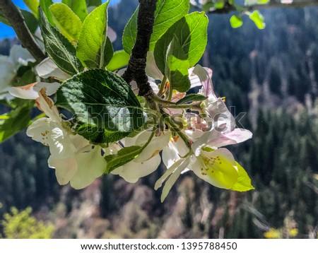 Beautiful flowers Himachal Pradesh India #1395788450