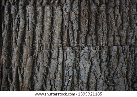 natural tree bark texture. Seamless tree bark texture. Endless wooden background for web page fill or graphic design. Oak or maple vector pattern #1395921185