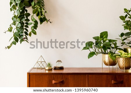 Nice and retro space of home interior with  vintage cupboard with elegant gold accessories, a lot of plants in stylish pots. Cozy home decor. Minimalistic concept. Home garden. Copy space. Template #1395960740