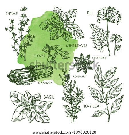 Collection of hearbs and spises; bay leaf, basil, thyme, rosemary, mint, cloves, dill, stas anise, cinnamon. Vector hand drawn illustration Royalty-Free Stock Photo #1396020128