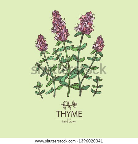 Background with of thyme: leaves and flowers of thyme. Vector hand drawn illustration. #1396020341