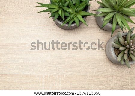 minimalist urban garden or stylish interior background with various succulents on a vintage wooden desk, nordic style flat lay