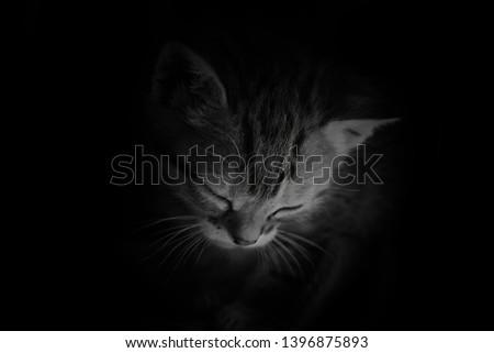 sad cat on dark background