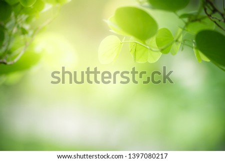 Closeup nature view of green leaf on blurred greenery background in garden with copy space for text using as summer background natural green plants landscape, ecology, fresh wallpaper concept. #1397080217