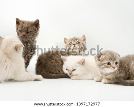 little funny kittens on a white background #1397172977