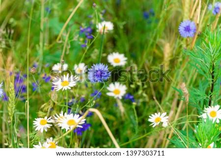 Summer flowers on the meadow. Wildflower meadow, flower meadow, wildflowers #1397303711