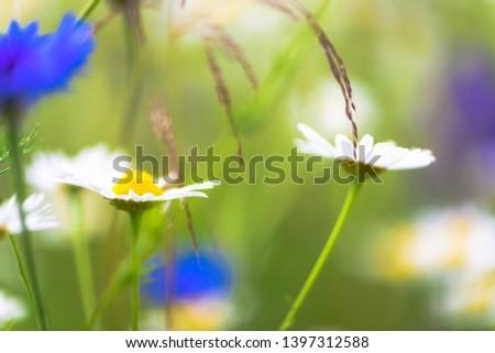 Summer flowers on the meadow. Wildflower meadow, flower meadow, wildflowers #1397312588