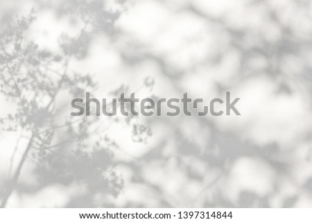 trees branch and leaf with shadow on a white concrete wall. Royalty-Free Stock Photo #1397314844
