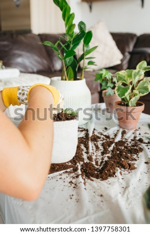 Placing houseplant into new pot #1397758301