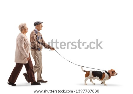 Full length profile shot of a senior couple walking a basset hound dog isolated on white background #1397787830