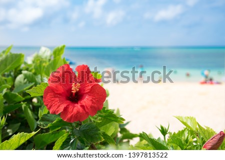 Hibiscus of Okinawa where the beach blooms #1397813522