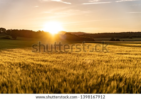 Amazing grass field landscape with spikes at sunset. The light of sunset over the field. Beautiful sky. Nature concept.  #1398167912
