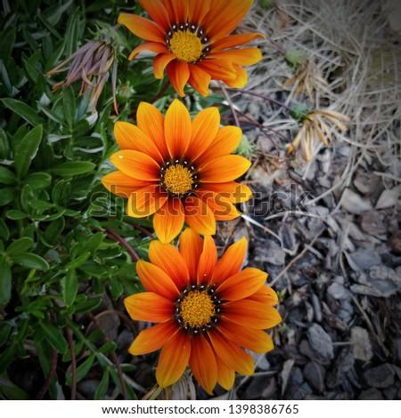 Orange flowers thriving in the sun #1398386765