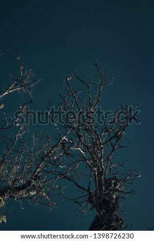 Dark and dark sky with tree #1398726230