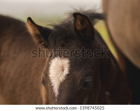 Close up of a young baby horse ears #1398745025