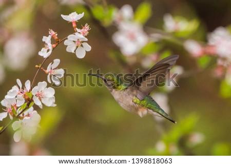 Hummingbird Flying Next to Blooming Flowers #1398818063