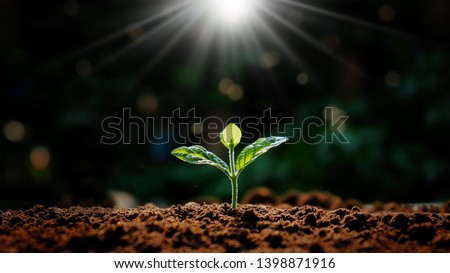 Small trees that grow in nature and morning light Concepts Earth Day #1398871916