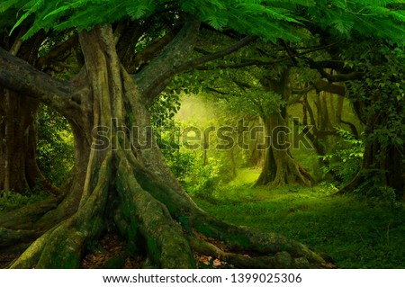 Southeast Asian rainforest with deep jungle #1399025306