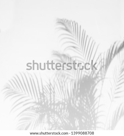 Gray shadow of palm leaves on palm tree abstract background   falling on white concrete wall  #1399088708