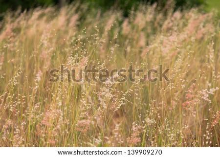 Stock Photo - green grass macro close up #139909270