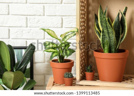Potted home plants and wooden crates against brick wall #1399113485