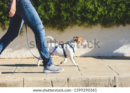Dog walker strides with his pet on leash while walking at street pavement #1399290365
