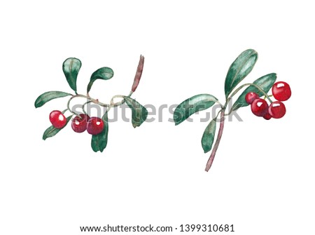 Watercolor hand painted isolated elements on white background. Forest berries. Cowberry. #1399310681