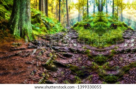 Deep forest tree roots after rain landscape. Tree roots in rainy forest. Tree roots in forest ground. Rain forest tree roots ground view #1399330055