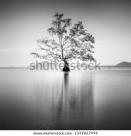 Minimalist fine art in black & white with single dead tree on the sea water. Soft focus due to long exposure.