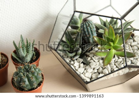 Different succulent plants on table near white wall. Home decor #1399891163