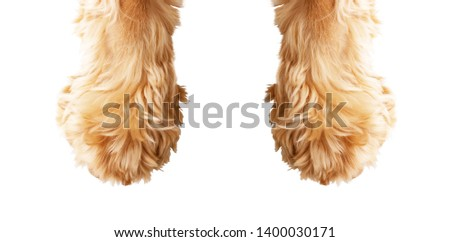 Dog paw on a white background Royalty-Free Stock Photo #1400030171