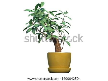 3D render of gorgeous indoor plant isolated on white #1400042504