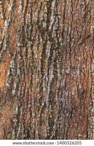 tree bark nature texture pattern wood background #1400326205