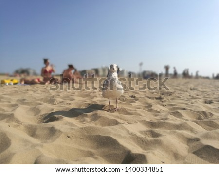 Seagull looking into the camera on a sandy beach on a sunny summer day #1400334851