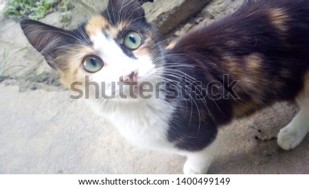 Cats are so cute and cute #1400499149