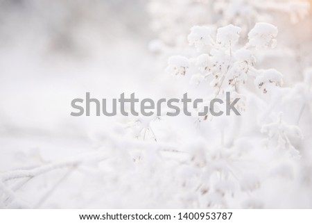 winter landscape, natural background, plant under the snow in the forest #1400953787