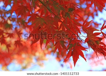 Japanese maple scene that turned red in autumn #1401112733