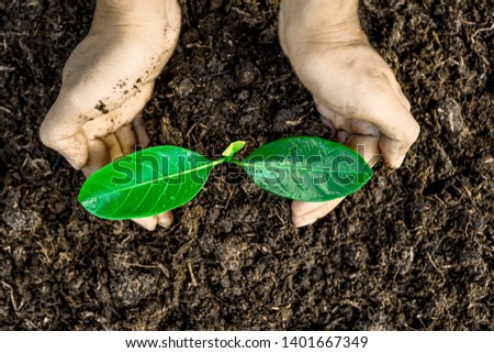 Close-up photos of planting tree seedlings, natural conservation concepts to reduce global warming. #1401667349