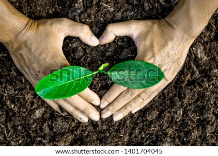 Close-up photos of planting tree seedlings, natural conservation concepts to reduce global warming. #1401704045