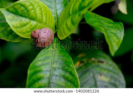 Tree Snail on leaves in El Yunque National Forest, Puerto Rico #1402081226