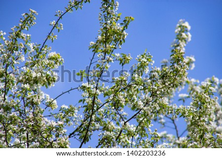 Apple blossoms against sky, great design for any purposes. Spring floral romantic concept. White background. Holiday background. Spring blossom. Nature background #1402203236