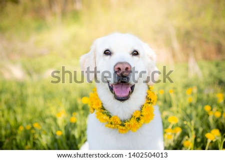 funny dog on the yellow meadow #1402504013