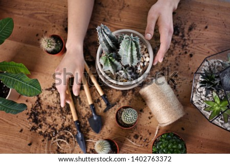 Woman taking care of home plants at wooden table, top view #1402763372
