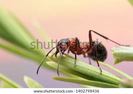 Ant runs quickly in the grass, clinging to the blades of grass.  Royalty-Free Stock Photo #1402798436