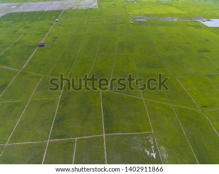 An aerial view of Paddy field in the Kota Belud,Sabah,Malaysia. #1402911866