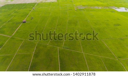 An aerial view of Paddy field in the Kota Belud,Sabah,Malaysia. #1402911878